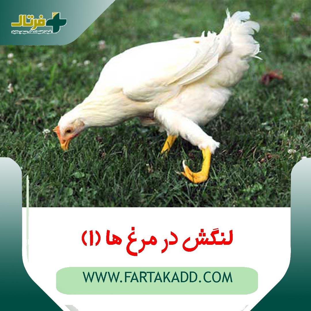 لنگش در مرغ ها 1