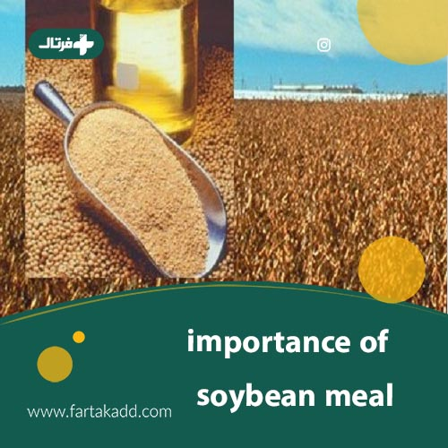 What is the importance of soybean meal?